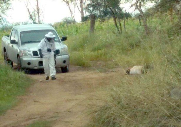 ¡Jornalero murió tras ser atacado por un enjambre de abejas en Aguascalientes!
