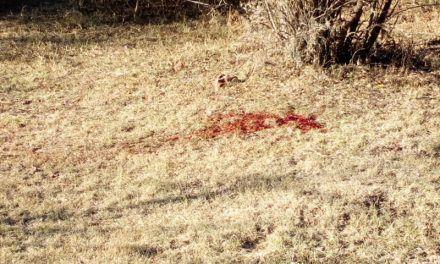¡Hallan persona ejecutada en la comunidad El Chiquihuitero en Calvillo!