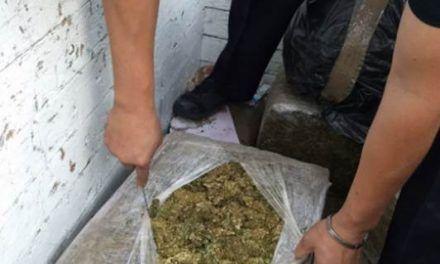 ¡Policía Federal detiene a una persona que transportaba casi 500 kilos de mota en Jalisco!