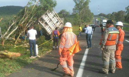 ¡Trailero aguascalentense murió tras estrellarse de frente contra un árbol en Lagos de Moreno!