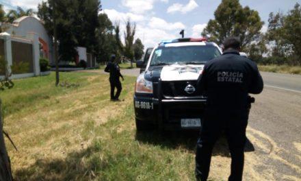 Detienen en Tepezalá a una persona que transportaba 18 cabezas de ganado sin la documentación requerida