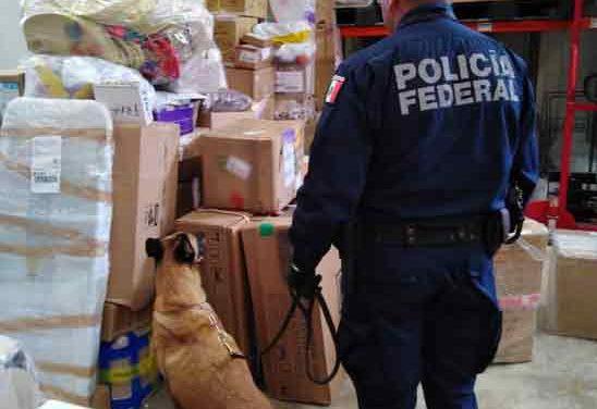 ¡Asegura Policía Federal un envío con 6 kgs de mota en una empresa de paquetería en Cancún!