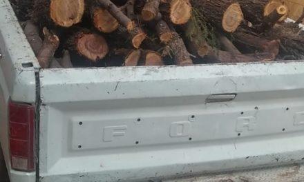Detienen en Pabellón de Arteaga a sujeto por tala de árboles de mezquite