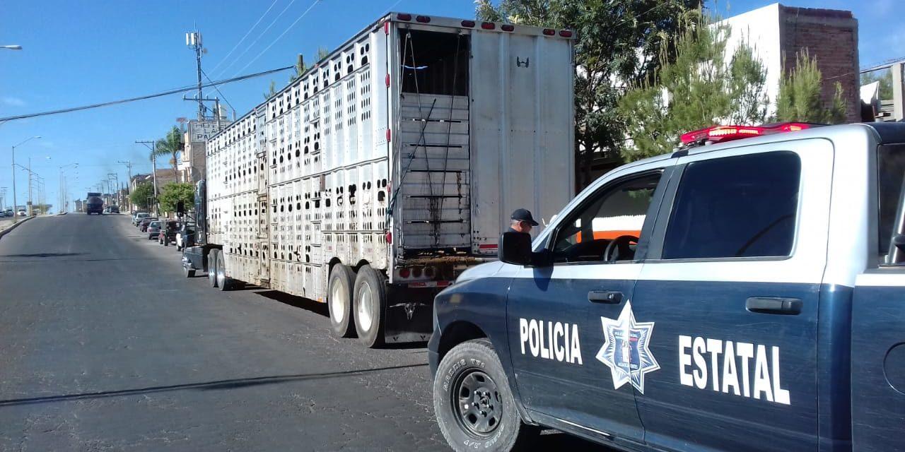 Refuerza la SSPE el combate al robo de ganado en la entidad