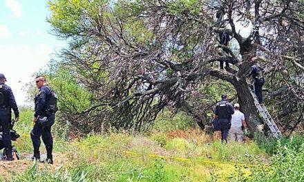 ¡Hallan suspendido a un hombre en lo alto de un árbol en Aguascalientes!
