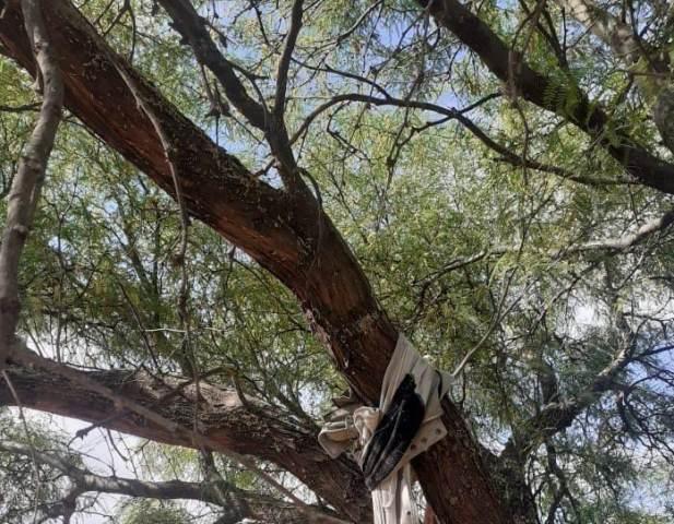 ¡En Rincón de Romos, Aguascalientes, hombre se quitó la vida ahorcándose!