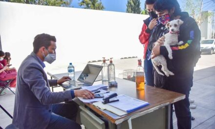 Inicia esterilización canina y felina para controlar y cuidar la salud de la población animal