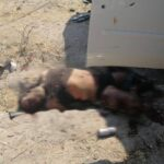 ¡1 muerto tras enfrentamiento entre grupos rivales en Teocaltiche!