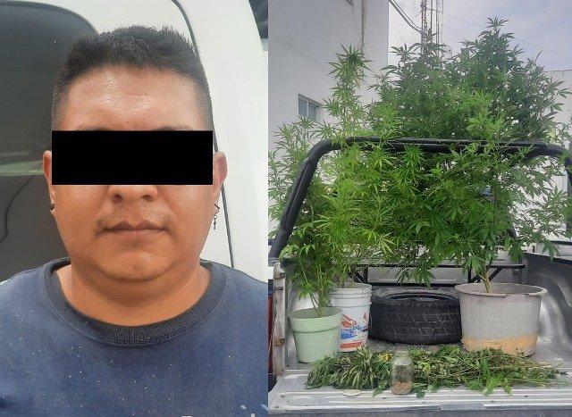 ¡En Aguascalientes detuvieron a sujeto con varias plantas de marihuana!